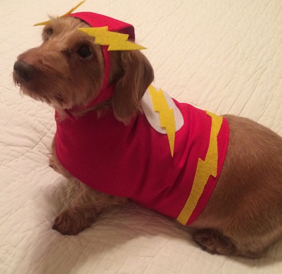Flash - OK for puppy costume, but not for websites
